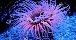 Beautiful Rare Sea Creatures | Amazing Wallpapers