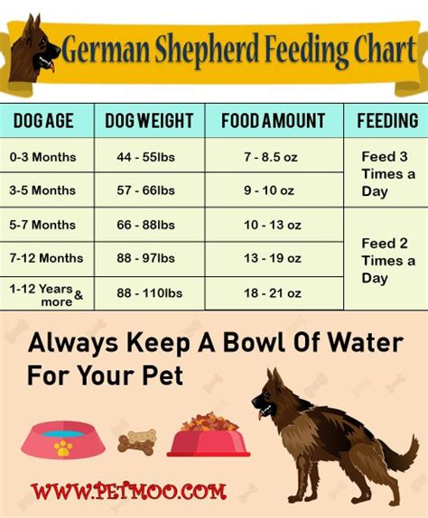 german shepherd breed info health problems petmoo
