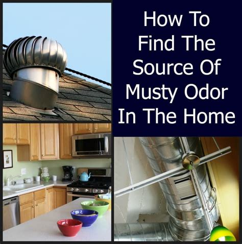 Musty Odor   Home Home Ec