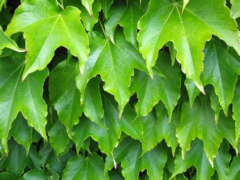 leaf plants pictures plant leaves