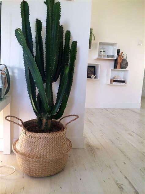plantes pour chambre 1000 idées sur le thème pots succulentes sur