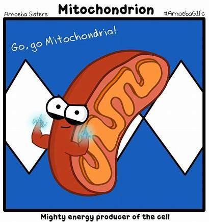 Mitochondria Cells