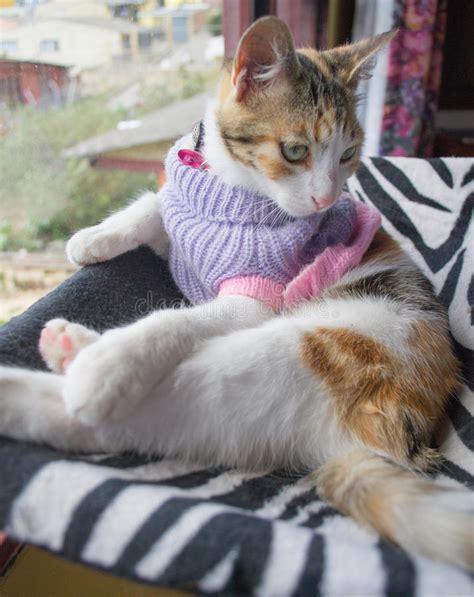 amaca gatto gatto in hammock fotografia stock immagine di occhi