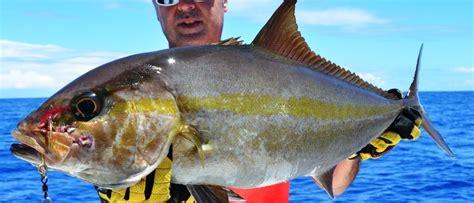 seriola dumerili amberjack fishing rod club mauritius rodrigues ocean indian island fish oil