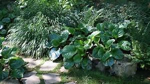 einen garten im schatten planen und anlegen grundsatzliches With garten planen mit zimmerpflanzen blumen