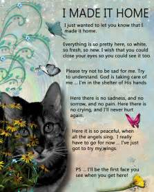 loss of a cat quotes 25 best ideas about losing a pet on losing a