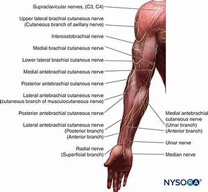 Cutaneous Blocks For The Upper Extremity