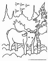 Moose Coloring Rub Pages Colormountain sketch template