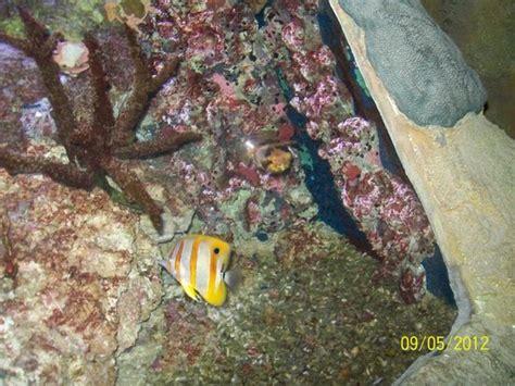 raie guitare photo de aquarium sea val d europe marne la vall 233 e tripadvisor
