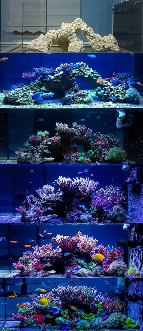 reef aquarium aquascaping progression of a reef tank saltwater
