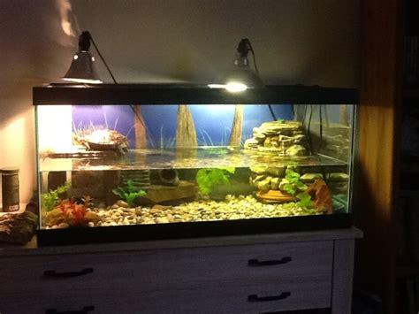 eared slider tank 10 best images about turtle habitats on pinterest pools indoor pools and aquatic turtles
