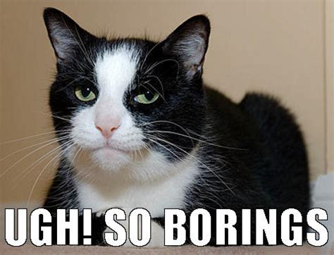Bored Cat Memes Image Memes At Relatablycom