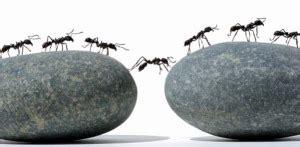 imut semut hitam membuka mata  wawasan