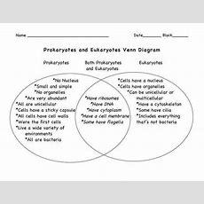 Prokaryotic And Eukaryotic Cells Worksheet Homeschooldressagecom