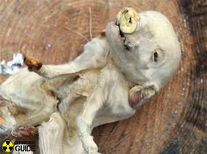 Chernobyl animal mutations - pictures and facts about ...
