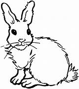 Rabbit Coloring Pages Bunny Animals Wildlife Drawing ارنب sketch template