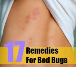 top 17 herbal remedies for bed bugs various herbal remedies for the bed bugs treatment