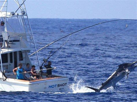 Fishing Boat Charters Cairns by Hotshot Charters Cairns Cairns City Australia