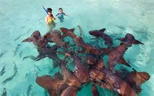 Exuma Bahamas Swimming with Sharks