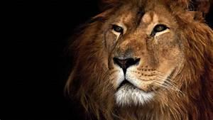 Images Of A Lion Head