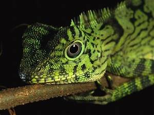 Mammals, Reptiles and Amphibians – Their Differences
