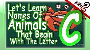 Animals names in english that begin with the letter c for Animals with the letter o in their name