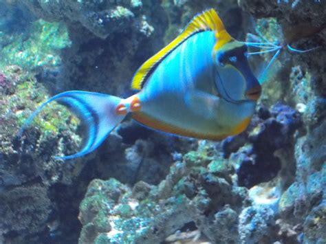 tang ellis aquatics
