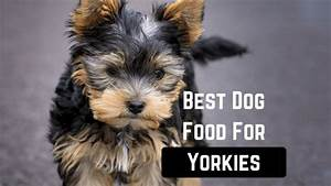 best dog food for yorkies smart dog owners With best dog food for yorkies