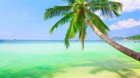 와이드 스크린  신선한 바다, 코코넛 나무, 하늘, 자연 풍경 바탕 화면의 Hd 벽지 높은 정의  전체 화면