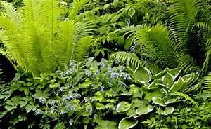 Was Blüht Im Schatten : der schatten bl ht auf schattengarten pinterest ~ Markanthonyermac.com Haus und Dekorationen