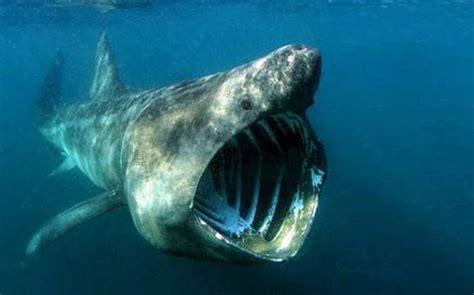 beautiful deep ocean  strangest sharks   world
