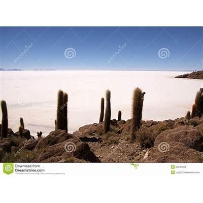 Isla Del Pescado Salar De Uyuni Bolivia Stock Images