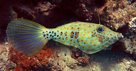 secret  identifying fish    species