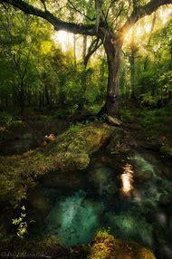 Florida Landscape Photography