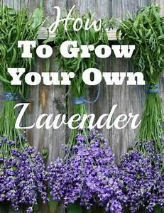 Lavendel Pflanzen Balkon : lavendel pflanzen balkon und gr nzeug pinterest ~ Lizthompson.info Haus und Dekorationen