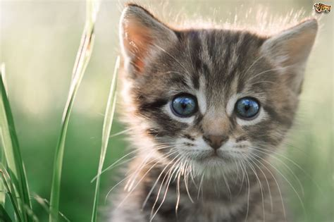 Kitten Emergencies  Signs To Look Out For Pets4homes