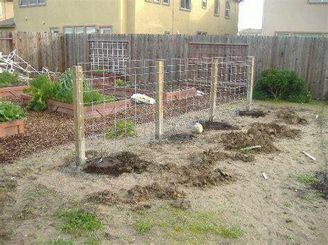 build a grape arbor sacramento vegetable gardening the wrong way to build a grape arbor