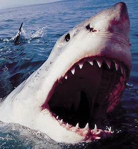 Egypt shark attack to strike in British waters next ...