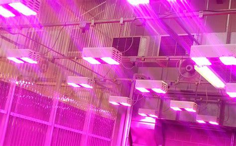 solutions for fluorescent light sensitivity analysis of arabidopsis light sensitive mutants grown