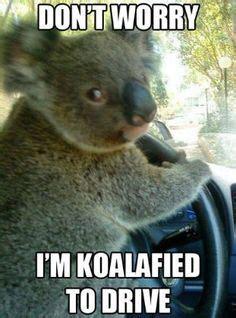High Koala Meme - meme bored on pinterest koala meme internet memes and cat facts