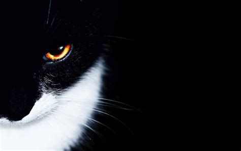 Orange Eye Wallpaper by Black Orange Backgrounds Wallpaper
