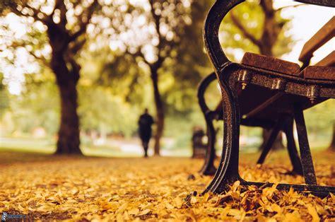 panchina parco panchina nel parco