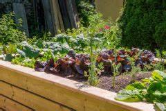 Pferdemist Für Tomaten : hochbeet mit tomaten diese sorten gedeihen hier ~ Watch28wear.com Haus und Dekorationen