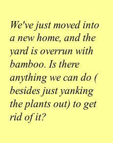how do you get rid of bamboo how to kill the bamboo that s taking over your yard getting a panda is not one of the
