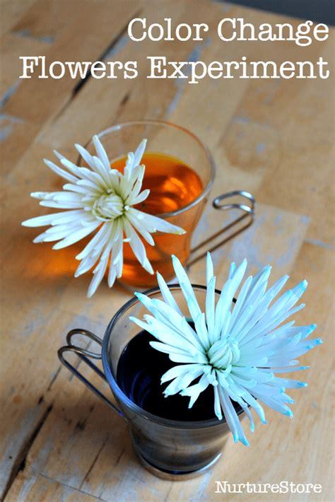 colour changing flowers experiment nurturestore