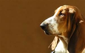 Cauliflower Ear in Dogs | eHow UK