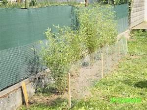 Wie Schnell Wächst Bambus : bambus kaninchen ~ Frokenaadalensverden.com Haus und Dekorationen
