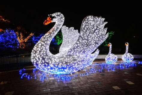 saint louis zoo christmas lights holiday light displays in st louis top 7 stl homelife