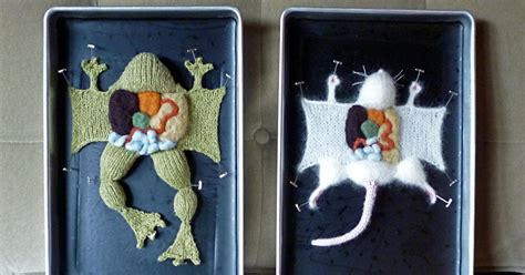 learn anatomy  knitted creatures  harming