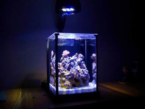 pico reef led lighting fluval spec owners thread page 2 pico reefs nano